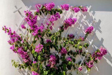 hotel-bristol-4-stelle-bellaria-giardino-fiorito
